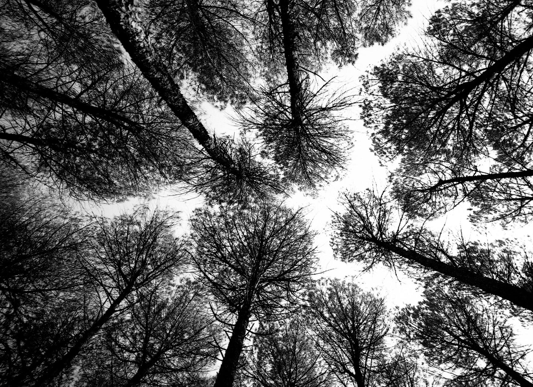 TREES-JUANMI-MARQUEZ