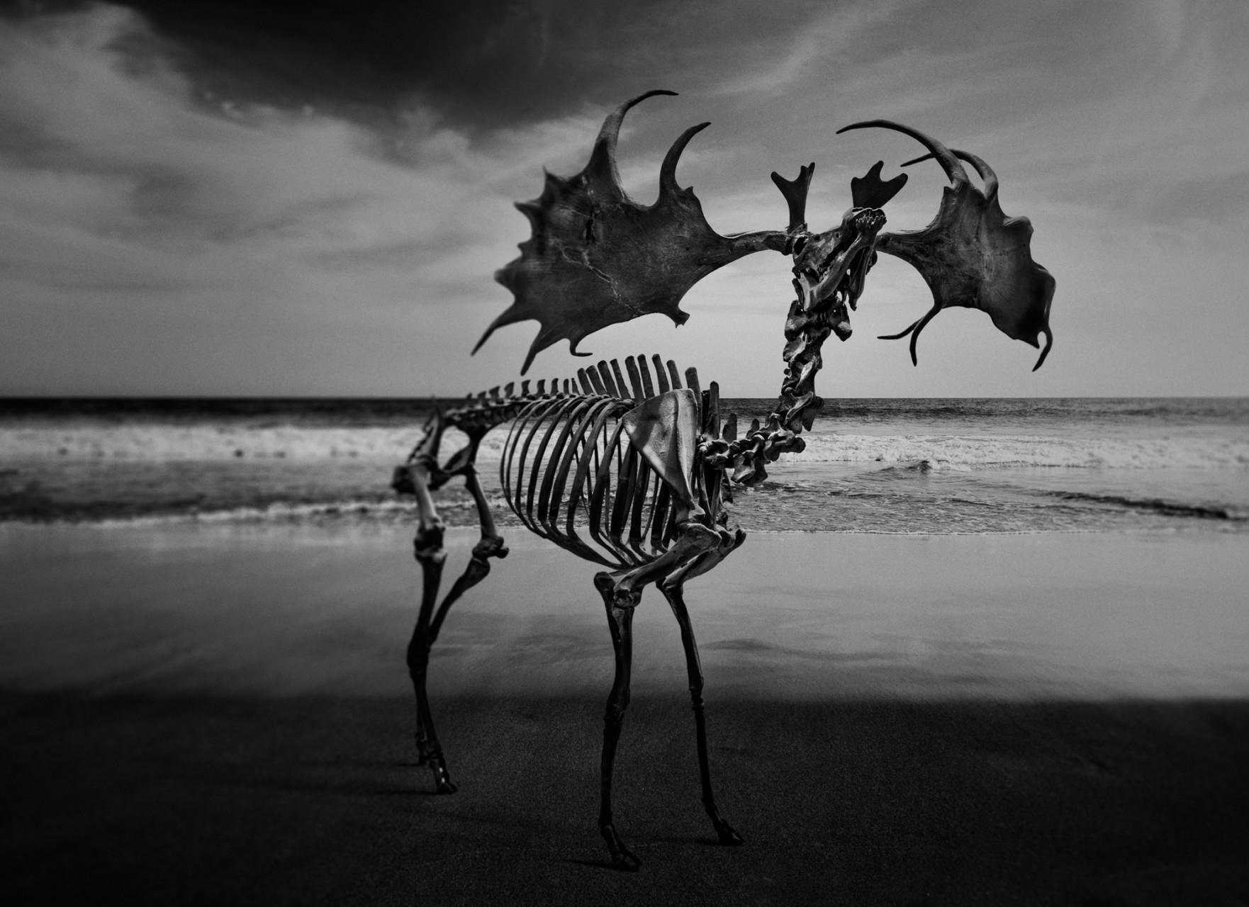 skeleton-juanmi-marquez